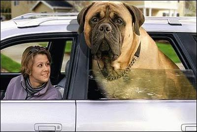 huge_dog.jpg